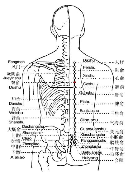 All About T6 6th Thoracic Vertebra Innerbodycom