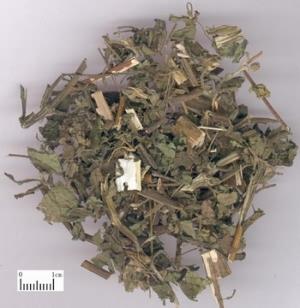 豨莶草 - TCM Herbs - TCM Wiki