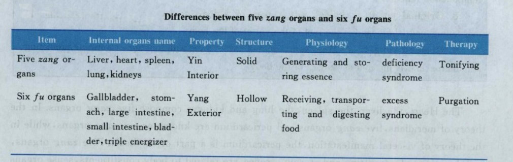 Differences between five zang organs and six fu organs